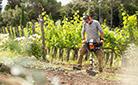 Почвенный бензобур STIHL на виноградниках