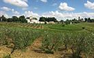 Ферма –  экологичное виноделие, основанное на принципах устойчивого развития